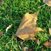 Herbstimpressionen.