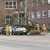 Umgestürzter Baum vor dem Amtsgericht.