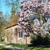 Magnolien vor der Kapelle in Strünkede.