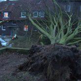 Das Tief Eberhard entwurzelte am Sonntag (10.3.2019 )mehrere Bäume im Stadtgebiet.