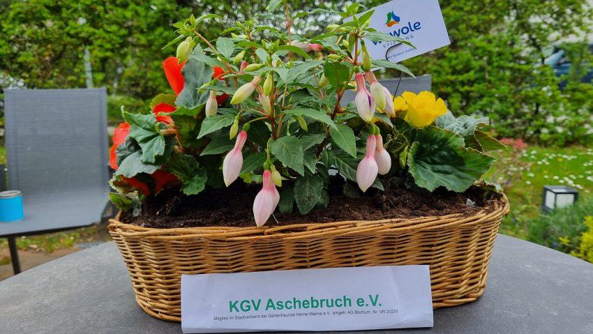 Neue beflanze Körbe von der Wewole für das Lukas-Hospiz.
