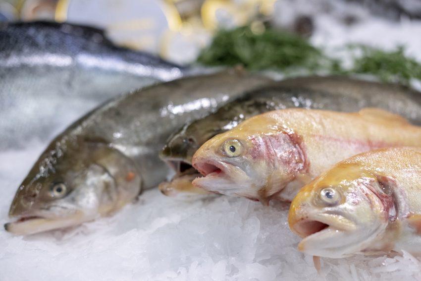 Menue-Karussell 2019: Gastronomen laden vom 1. Februar bis zum 31. März zu winterlichen Vier-Gang-Menues ein. Vorstellung des diesjährigen Programms bei Niggemann Food Frischemarkt GmbH in Bochum (NW), am Mittwoch (23.01.2019).