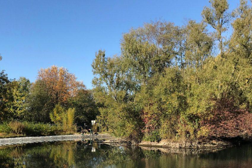 Dorneburger Teich wird neu begrünt.