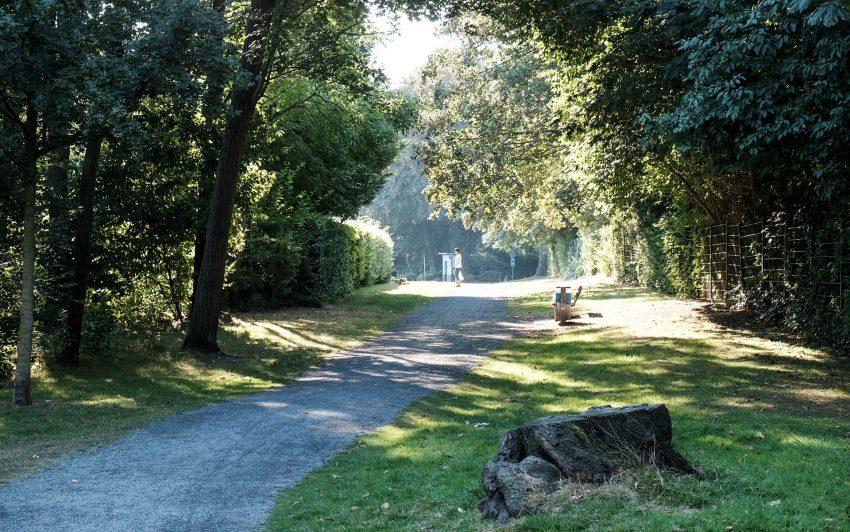 Bäume auf dem Knappschen-Gelände Bäume auf dem Knappschen-Gelände