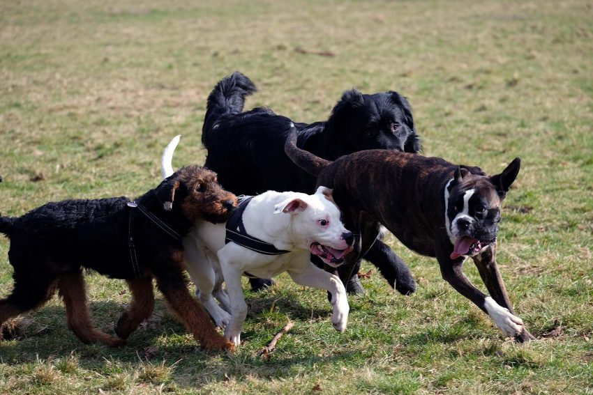 Hundeschule auf den Schlosspark-Wiesen.
