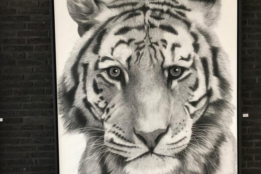 Der Tiger ist das Motiv der Ausstellung.