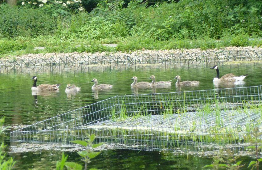 Während der Bürgersprechstunde von Mathias Grunert berichtete Stadtgrün-Mitarbeiter Thilo Sengupta von einer zusätzlichen Uferbepflanzung am Ostbachteich.