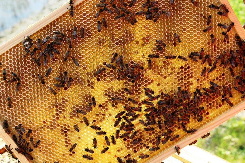Bienen am Wertstoffhof.