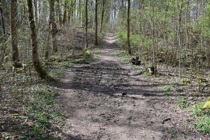 Der Reitweg im Waldstück hinter der Hügelstraße.