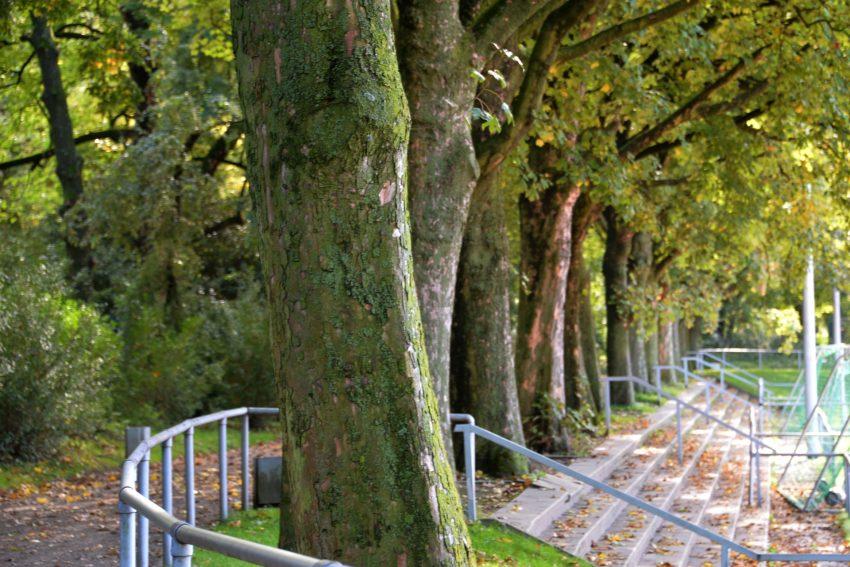 Naturkundlicher Spaziergang durch Holsterhausen.
