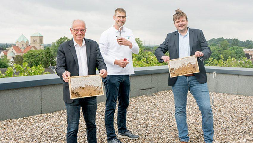 Bienen auf dem Dach des Technischen Rathauses, im Bild Thomas Semmelmann, Tobias Büch und Philipp Brüggemann.