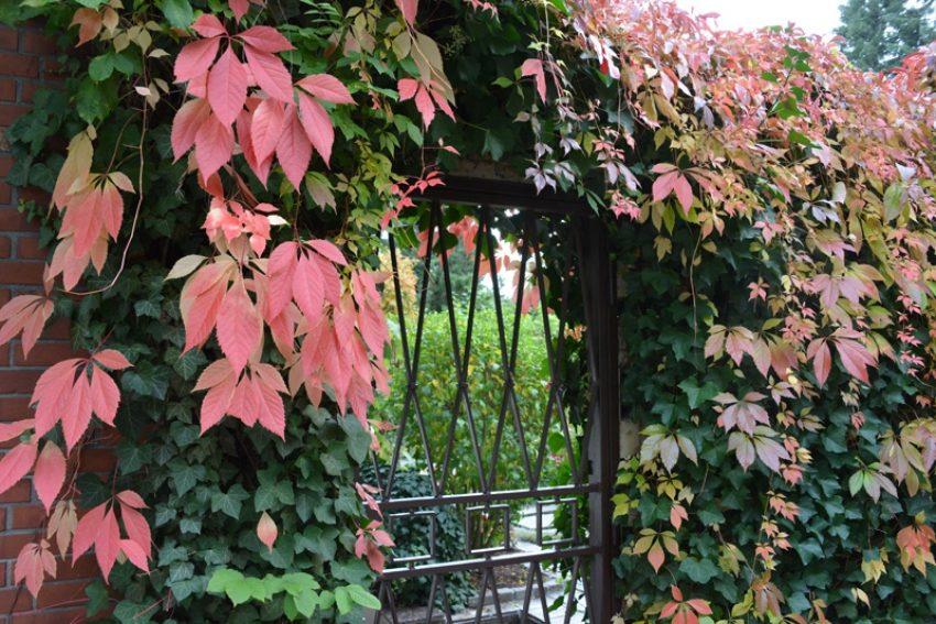 Herbstlaub - Goldener Oktober.