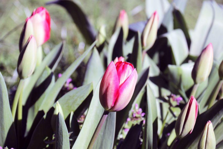 Frühlingsblumen im Garten.