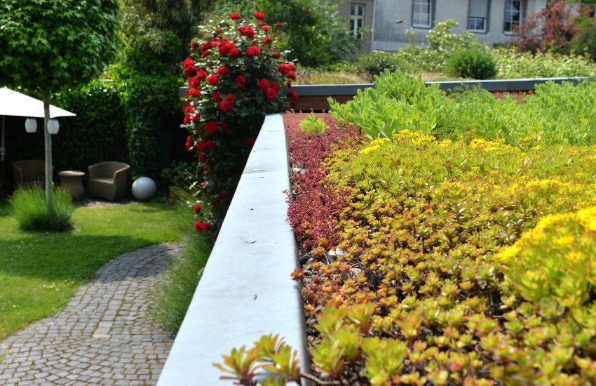 Blühende Gärten - damit die Städte keine Steinwüsten mehr sind. Naturschutzakademie bietet in Online-Seminar Informationen für eine klimafeste Stadtgestaltung.