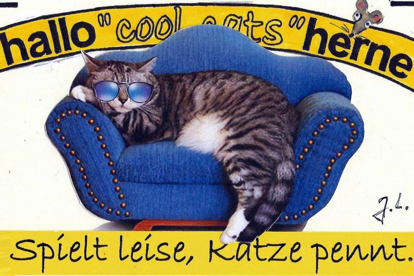 Sofakonzert-Katze.