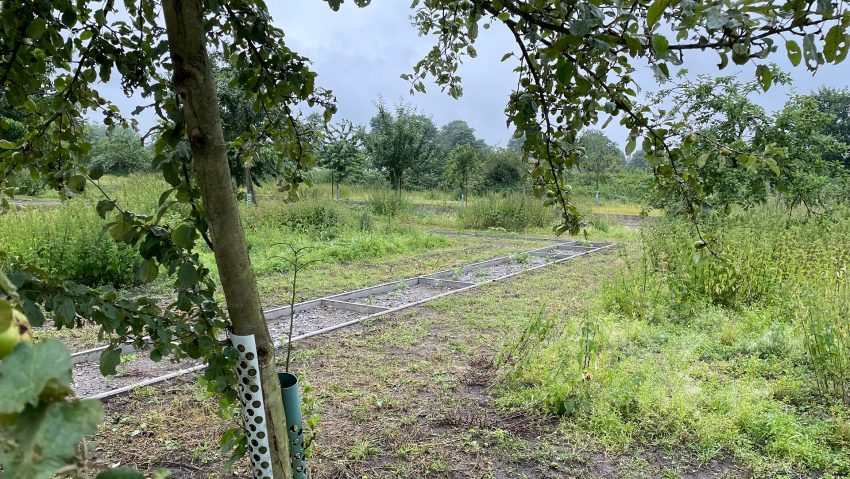 Streuobstwiese Holper Heide neu gestaltet.