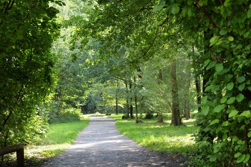 Waldweg im Revierpark Gysenberg.