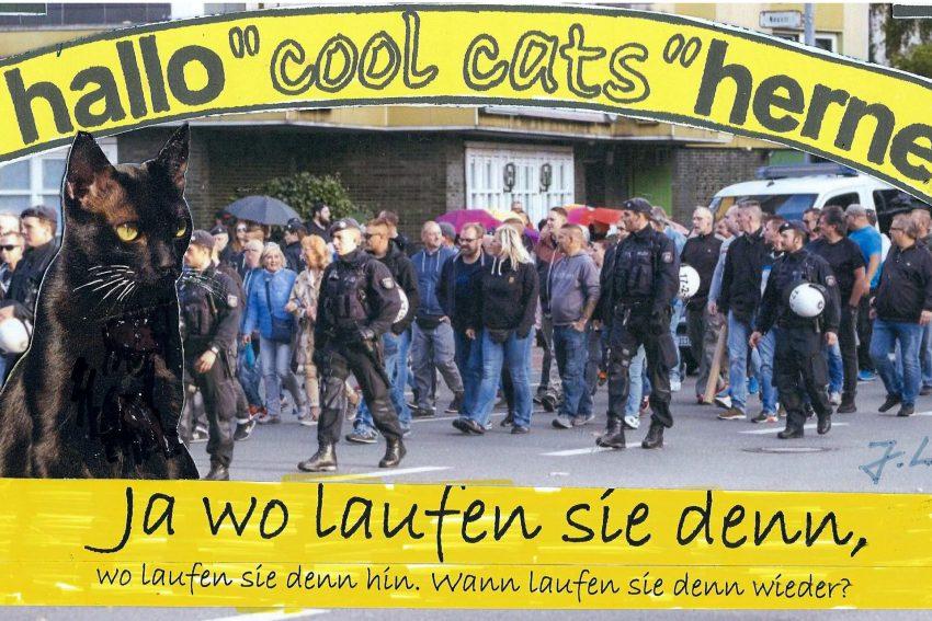 Die Cool Cats wundern sich: Wo laufen sie denn?
