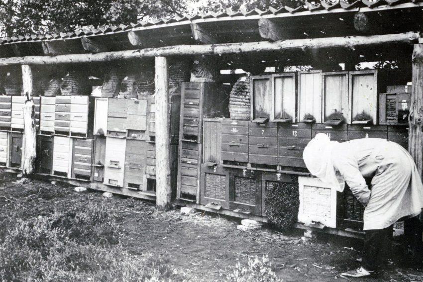 Bienenhaus.