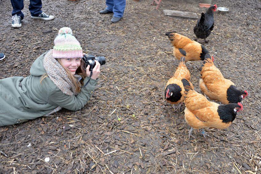 Clara -auf Fotopirsch im Hühnerstall.