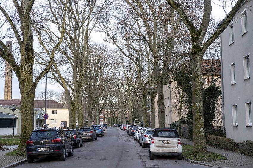 Blick in die Düngelstraße in Herne (NW) in östliche Richtung. Die Straße wird gesäumt von Eschen. 21 Bäume sind nach Angaben der Stadtverwaltung, von einem Pilz befallen sind und müssen entfernt werden. Von den kranken Bäumen gehe eine akute Gefahr aus. Der Pilz sorge vor allem dafür, dass Äste und Kronen austrocknen. Die Eschen sollen durch Pflanzung einer anderen, für den Straßenraum geeigneteren Baumart ersetzt werden. Die Bäume sollen vom 22. bis 24 Februar gefällt werden. Absolutes Halteverbot gilt daher in diesem Zeitraum in diesen Straßen: Koppenbergs Hof, In dem Breil, Auf dem Metlerort und in der Franz-Düwell-Straße.
