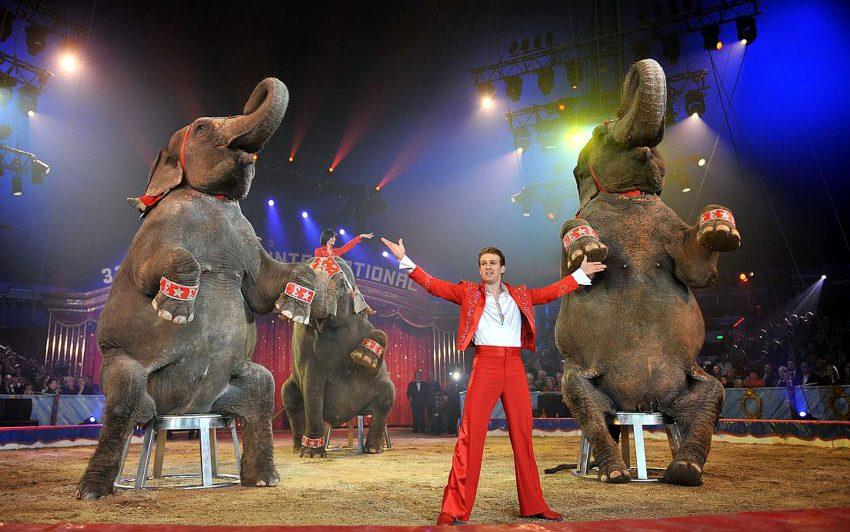 Vorführung im Zirkus Charles Knie.
