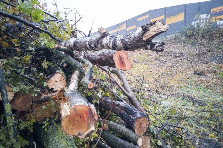 Gefällte Bäume an der Autobahnauffahrt zur A42 im Autobahnkreuz in Herne (NW), am Montag (18.11.2019).