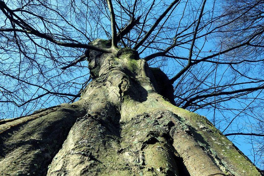 Bäume, die in den Himmel wachsen.