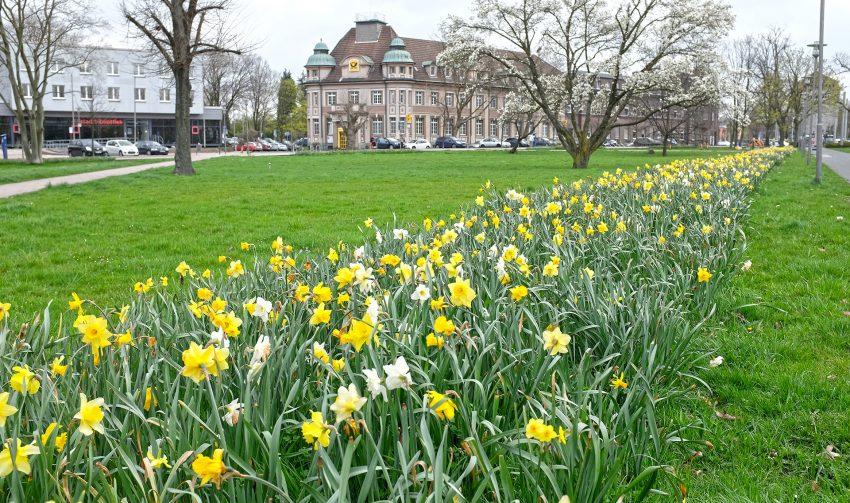 Der Frühling ist in Wanne-Eickel angekommen.