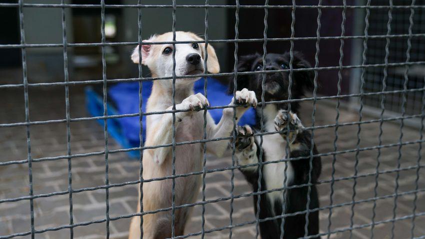 Spendenübergabe an das Tierheim Herne-Wanne