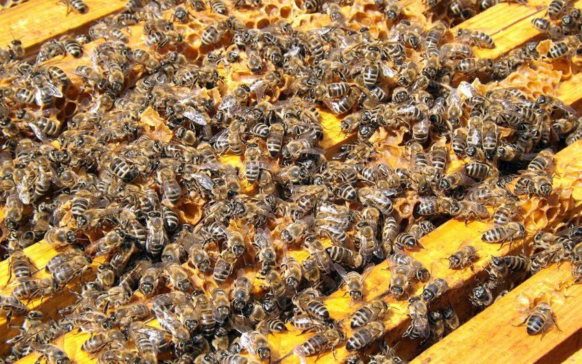 500 Bienenvölker leben in Herne.