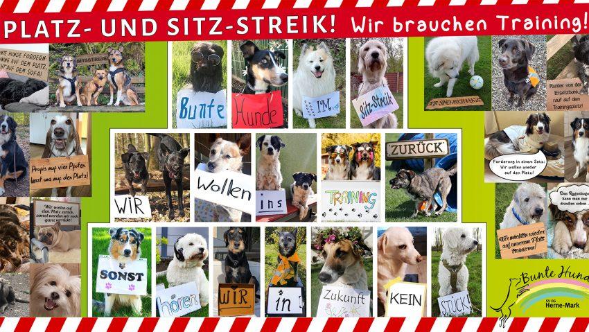 Der Verein will darauf aufmerksam machen, wie wichtig Hundetraining für eine gute Entwicklung des Tieres ist.