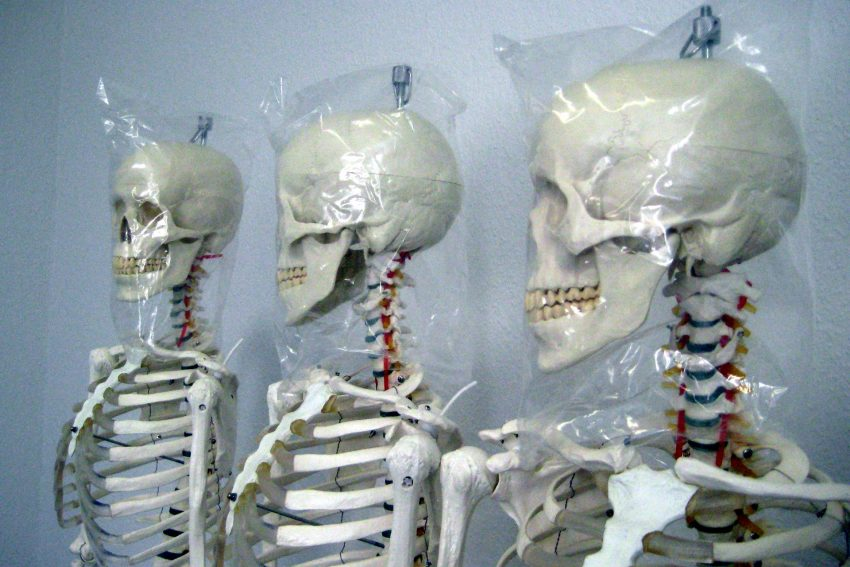 Künstliche Skelette als Studien-Objekte in der Akademie.