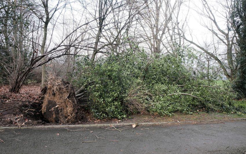 Umgestürzte Bäume im Sportpark Eickel.