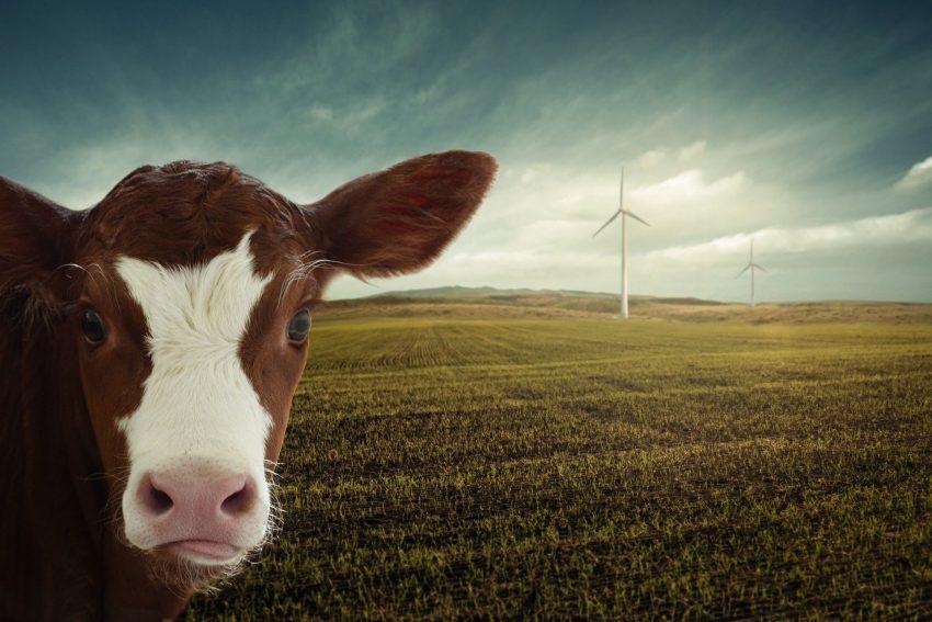 Digitale Veranstaltung des Eine Welt Zentrum zum über Klimawandel und weltweite Ernährung.