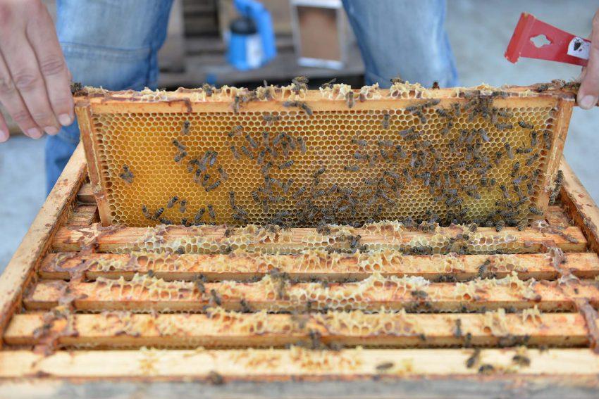 Bienen-Biotop auf dem Eickel Center.