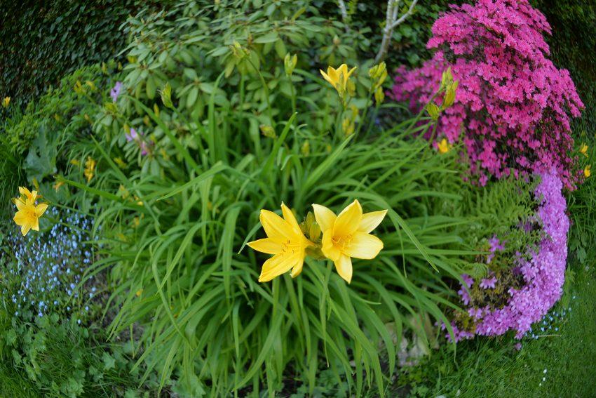 Schöne Wörter und schöne Blumen tummeln sich im Garten.