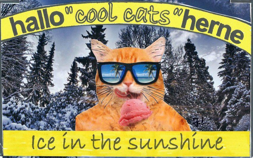 cool cats mögen es kalt.