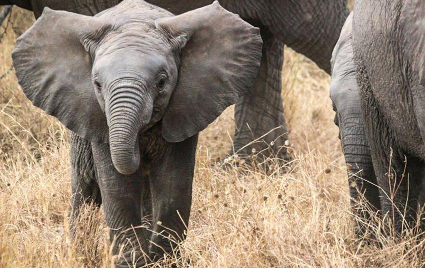 Ein Elefant möchte zu seiner Familie.