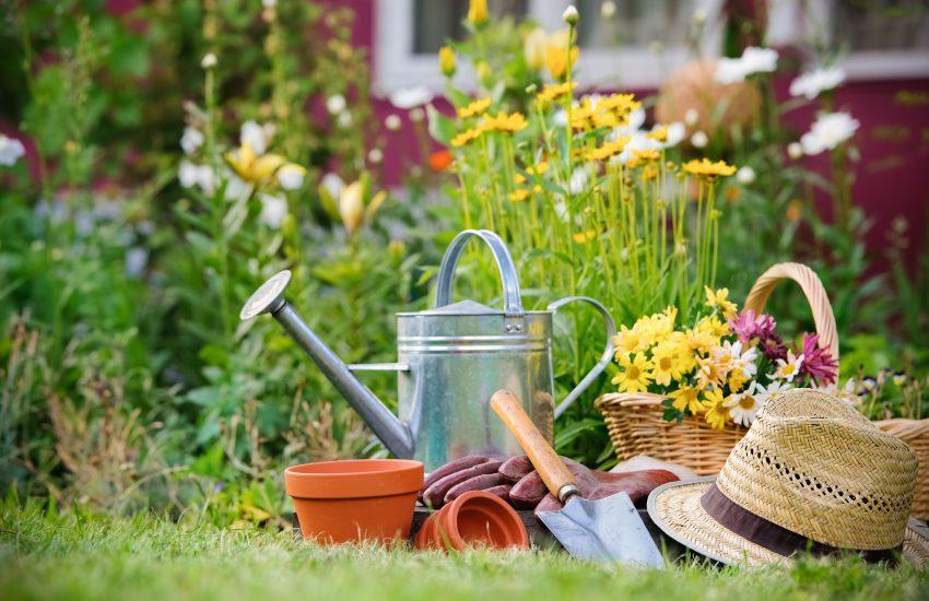 Nur gute Kenntnisse über einheimische Gartenpflanzen schützen vor möglichen Vergiftungen. (NUR AOK)