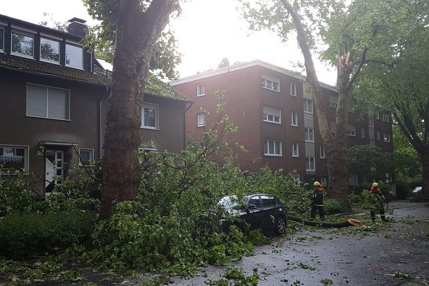 Gewitter bringt Bäume zu Fall.