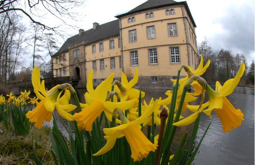 Narzissen vor Schloss Strünkede.