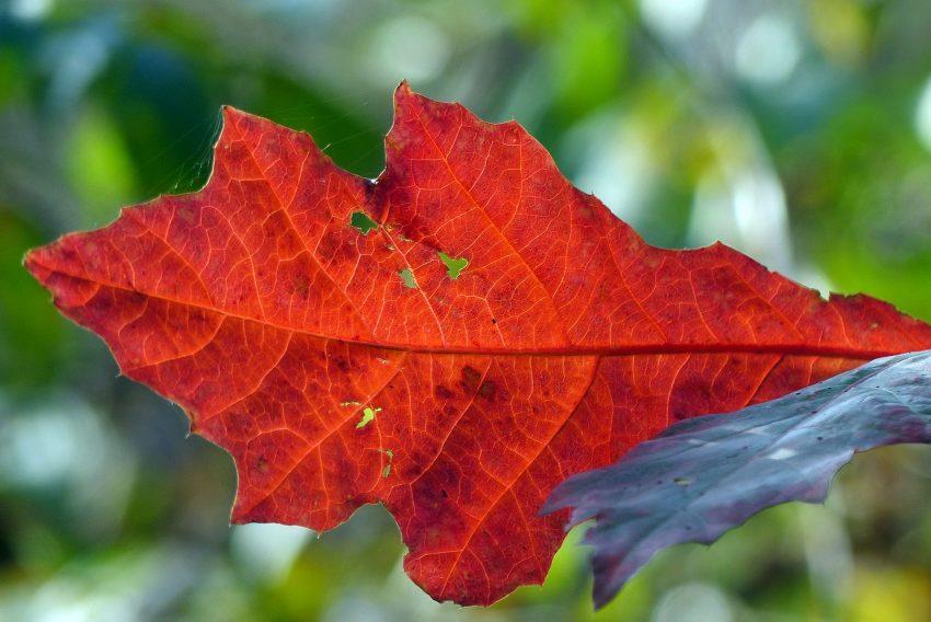 Herbstimpressionen im Hertener Stadtgebiet.