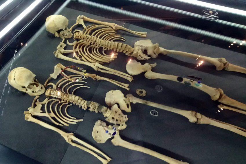 Skelette in der Ausstellung.