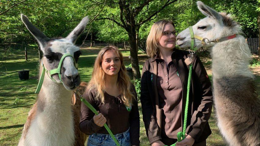 Die Lamas Max (li.) und Moritz von Daniels kleiner Farm mit ihren Tierpflegerinnen.