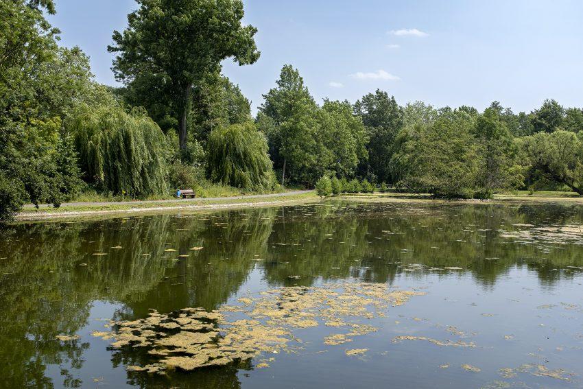 Der Ostbachteich an der Sodinger Straße in Herne (NW), am Sonntag (30.06.19). Das Gewässer ist stark mit Algen bewachsen, an der Wasseroberfläche treiben inzwischen viele tote Fische.